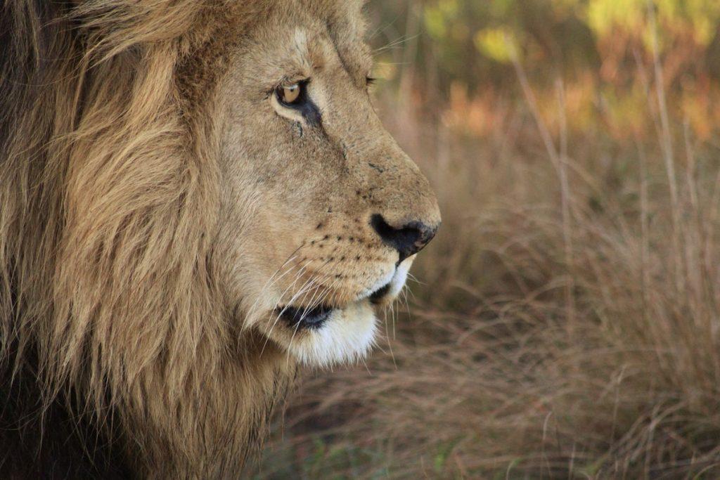 Viajar a África a hacer un safari